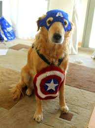 captain america inspired crochet pet costume for large breed dogs
