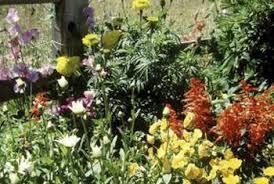 Fertilizer For Flowering Shrubs - the best way to fertilize established flower beds home guides