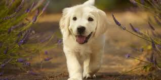 puppy thanksgiving 25 cutest dog breeds most adorable dogs