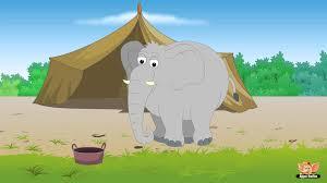 animal facts in hindi elephant youtube