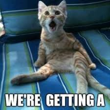 Meme Shock - cat memes purrfect love