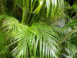Tropical House Plants Names - searching for nature in yangon part one
