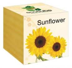 sunflower wedding favors sunflower seed plant favors sunflower wedding favors seeds