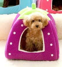 Rabbit Beds Amazon Com Spring Fever Rabbit Dog Cat Pet Bed Small Big Animal