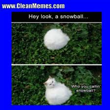 Clean Memes - cat memes clean memes the best the most online page 3