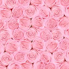 pink backdrop huayi pink roses backdrops for girl baby photo pink