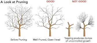 now is the best time for pruning many of your trees and shrubs
