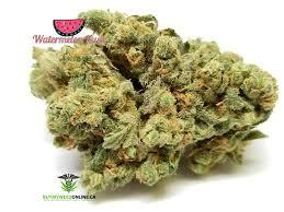 bentley watermelon weed reviews organic watermelon kush aaaaa by buy my weed
