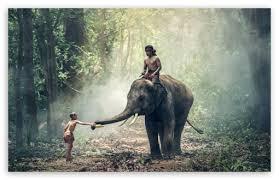 apple wallpaper elephant man riding an elephant 4k hd desktop wallpaper for 4k ultra hd tv