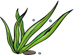 sea grass clipart pencil and in color sea grass clipart