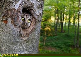 owl in a tree fugly