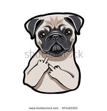 pug stock images royalty free images u0026 vectors shutterstock
