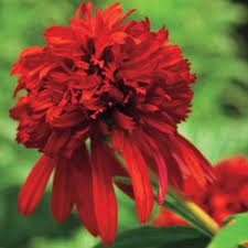 awesome looking flowers dracula plant 1 reviewer said
