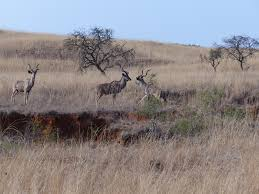 south africa 14 days in kwa zulu natal a first timers journey 581