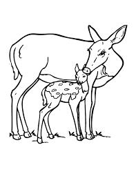 free coloring pages baby deer coloring pages printable deer