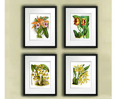 Hawaiian Decor For Home View Botanical Prints By Gnosispicturearchive On Etsy