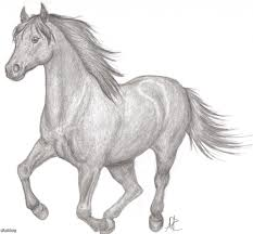 pencil sketches of horses running running horse a