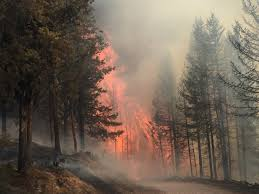 wildfires the smoking gun of western climate change treesource