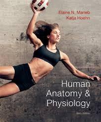Human Anatomy And Physiology Chapter 1 Human Anatomy U0026 Physiology 9th Edition Chapter 1 The Human