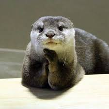 Please Tell Me More Meme - please tell me more otters pinterest otters animal and