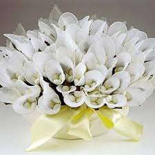 drag es mariage fleurs en dragées arum mariage