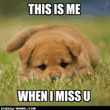 Puppy Eyes Meme - sad puppy eyes meme puppy best of the funny meme