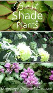 native and adapted landscape plants 137 best plants images on pinterest gardening flowers and