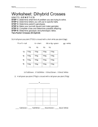 Dihybrid Crosses Worksheet Dihybrid Crosses