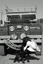 older land rover discovery 122 best dogs and landrovers images on pinterest land rovers