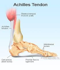 Picture Of Human Knee Muscles Ruptured Tendon Read About Symptoms And Treatment