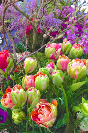 Spring Colors Best 25 Parrot Tulip Flower Pictures Ideas On Pinterest Parrot