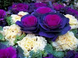 Plant Flower Garden - 281 best gardening images on pinterest flower gardening flowers