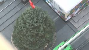 50 foot tree arrives at square