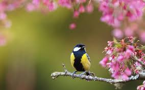 Image Of Spring Flowers by Bird Spring Flowers Hd Wallpaper 252396