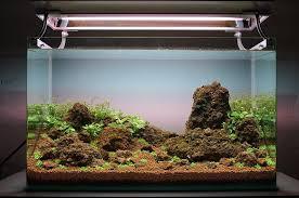 membuat filter aquarium kecil cara membuat aquascape sederhana atagaleri net