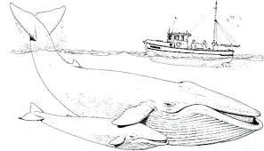 Whale Coloring Pages Fishing Boat Over Two Blue Whale Coloring Whale Color Page