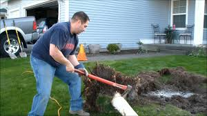 best how to remove small tree stumps from fabfedbffddadfebfeaa