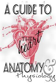 anatomy and physiology heart study guide information made by a