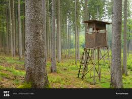 Tree Trunk Hunting Blind A Hunting Blind In A Spruce Forest In Spessart Bavaria Germany