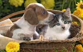 74 entries in kittens and puppies wallpapers group