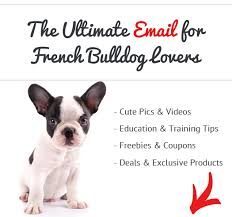 best dog food for french bulldogs learn what real owners feed