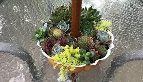build a 5 gallon bucket garden to grow tons of fresh veggies