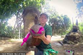 ele onardo da vinci painting elephant sells masterpieces