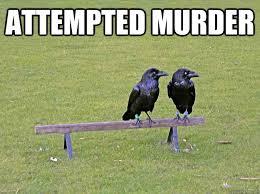 Attempted Murder Meme - attempted murder crow humor quickmeme