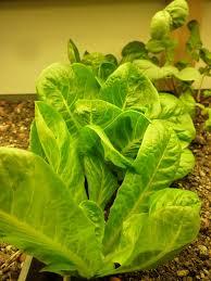 18 best indoor garden images on pinterest gardening vegetable
