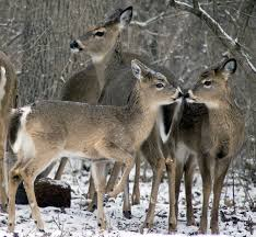Indiana Wildlife images 15 photos of wildlife in indiana that will drop your jaw jpg