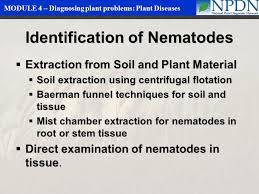 Plant Diseases Identification - diagnosing plant problems plant diseases ppt video online download