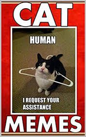 Funny Memes Cats - memes funny cat memes meow check out these funny memes jokes