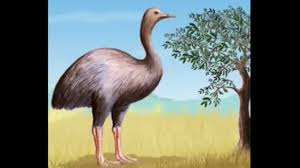 facts about the elephant bird youtube