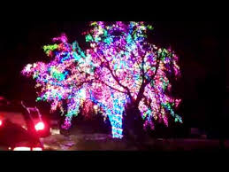 christmas lights in missouri the magic tree columbia missouri christmas youtube